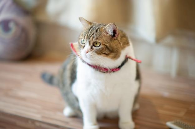Simpatici e allegri gatti da compagnia seduti in casa, il concetto dell'amante fedele Foto Premium