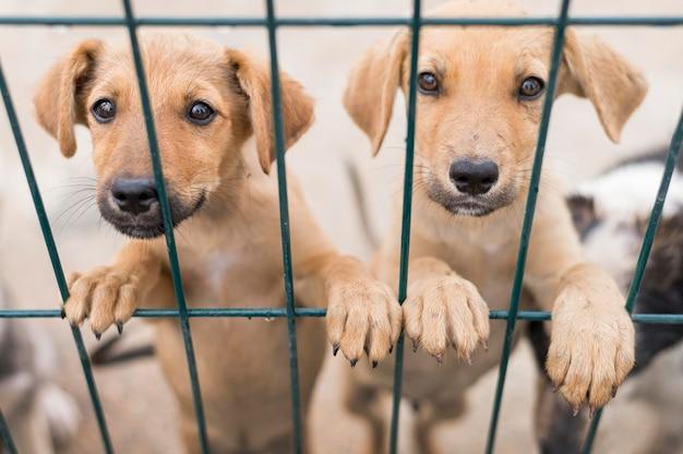 Simpatici cani da salvataggio al rifugio di adozione in posa dietro il recinto Foto Premium