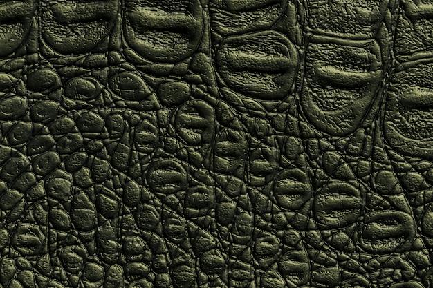 Trama in pelle verde scuro, primo piano. pelle olivastra di rettile, macro. natura struttura del tessuto. Foto Premium