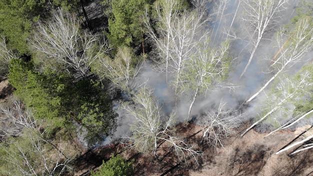 Dark misterioso paesaggio forestale bruciato. foresta coperta di cenere dopo l'incendio. fumo che sale dal suolo dopo un incendio. Foto Premium