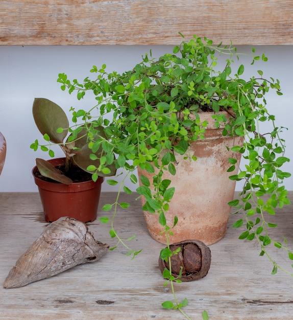 Pianta decorativa in una pentola di terracotta ed elementi decorativi su una panca in legno. Foto Premium