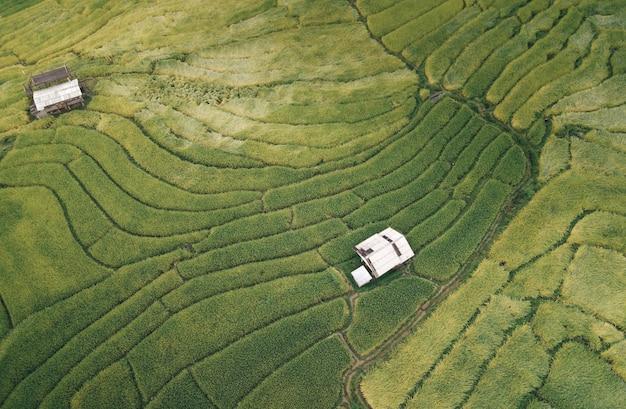 Defaultvista aerea risaie naturali per la coltivazione, terrazza del campo di riso sulla montagna Foto Premium