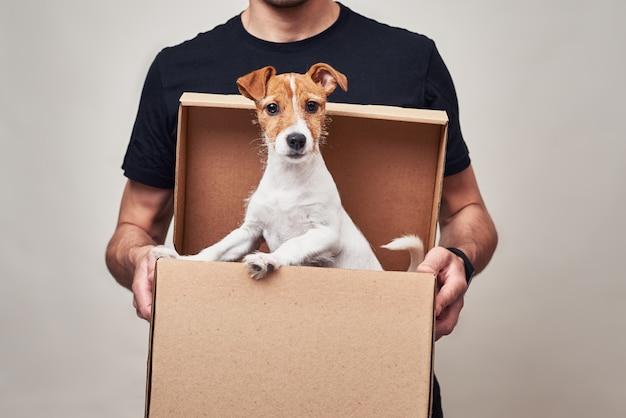 Uomo di consegna in uniforme nera tenere scatola di consegna di cartone con cane jack russel in esso. simpatico animale domestico come regalo Foto Premium