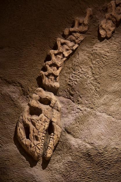 Fossile di dinosauro Foto Premium