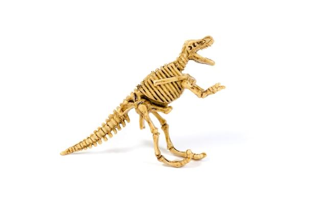 Scheletro del dinosauro isolato su bianco Foto Premium