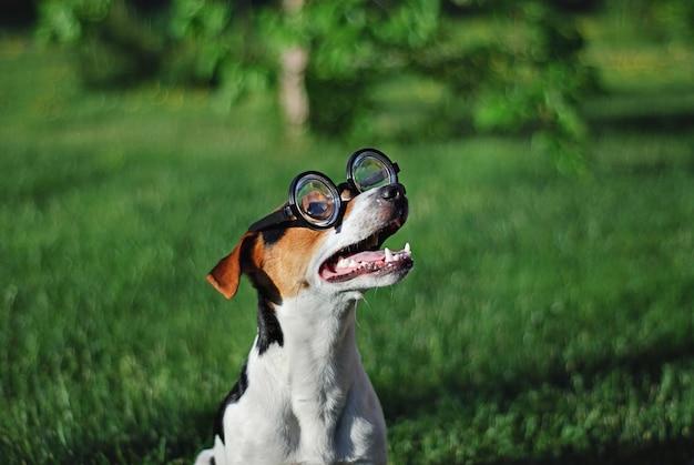 Cane in occhiali da lettura rotondi con la bocca aperta Foto Premium