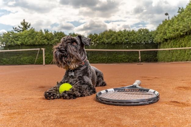 Cane su un campo da tennis con palla e racchetta Foto Premium