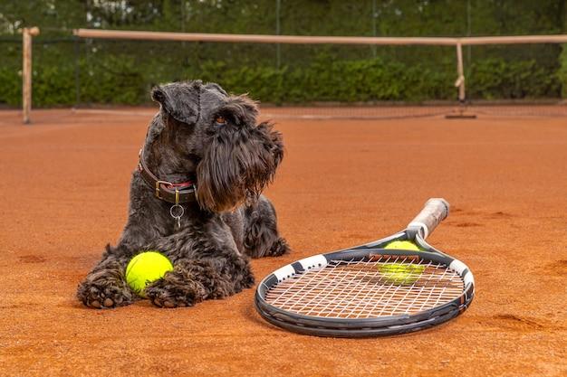 Cane su un campo da tennis con palline e racchette Foto Premium
