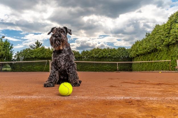 Cane su un campo da tennis con le palle. Foto Premium
