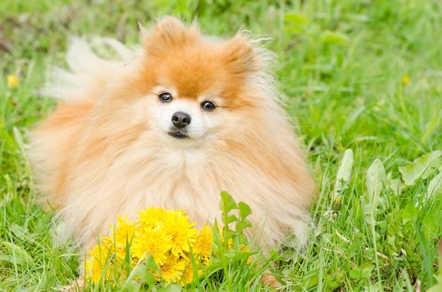 Cane con il mazzo di fiori su verde Foto Premium