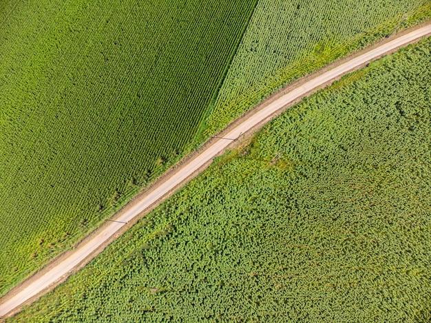 Drone foto da un mais in estate in spagna Foto Premium