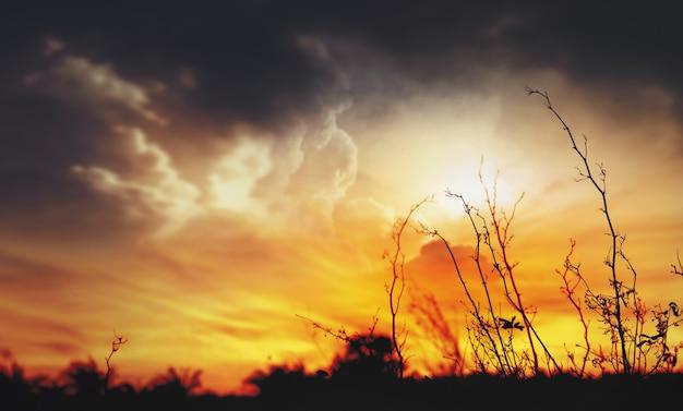 Rami secchi con incendi che bruciano come sfondo. Foto Premium