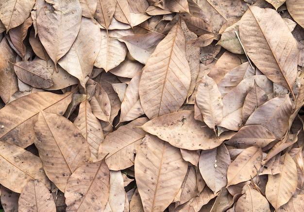 Asciughi le foglie sul fondo di autunno del pavimento Foto Premium