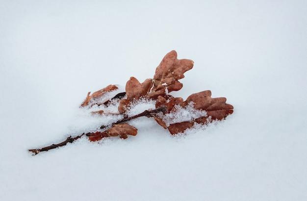 Foglie di quercia secche sulla neve in una gelida giornata invernale Foto Premium