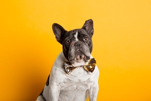Elegante bulldog francese con farfallino con paillettes sulla parete gialla. Foto Premium