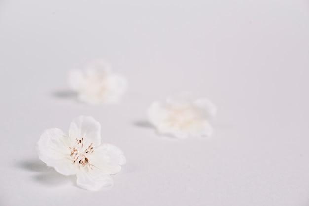 Elementi per un massaggio rilassante in una spa Foto Premium