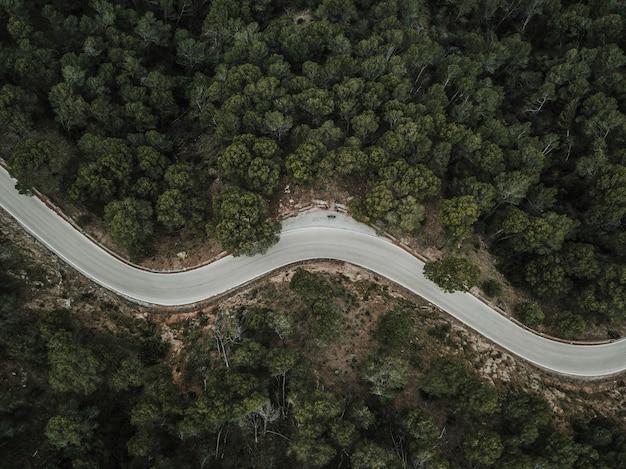Vista elevata della strada curva vuota attraverso la foresta Foto Premium