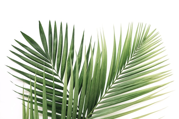 Vista elevata delle foglie di palma verdi sopra fondo bianco Foto Premium