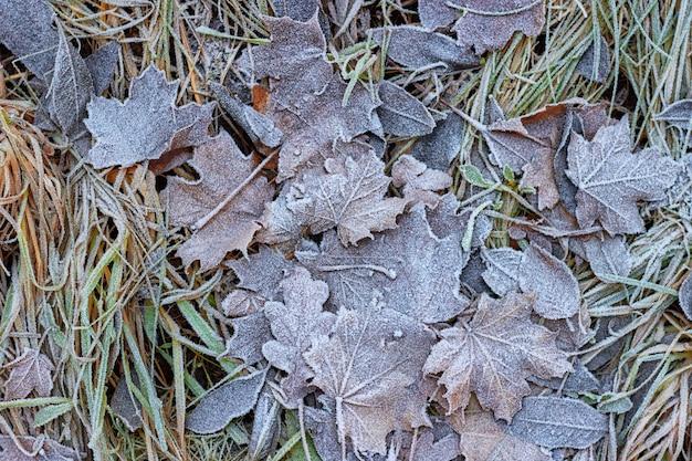 Fogli di autunno caduti coperti di brina. ciao inverno Foto Premium