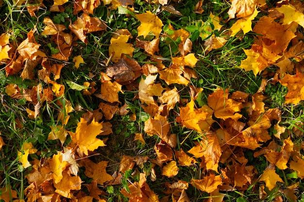 Fogli di autunno caduti sull'erba verde Foto Premium