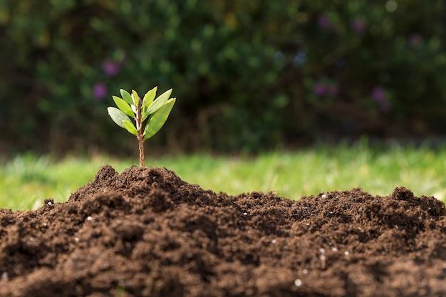 Fantastica scena con bella pianta Foto Premium