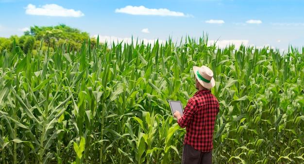 Agricoltore utilizzando computer tablet digitale nella piantagione di campo di mais coltivato Foto Premium