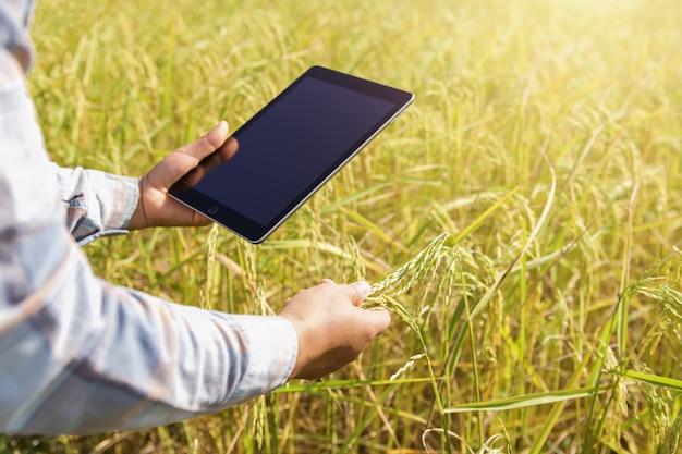 Agricoltore che utilizza tecnologia della compressa che ispeziona riso che cresce nell'azienda agricola Foto Premium