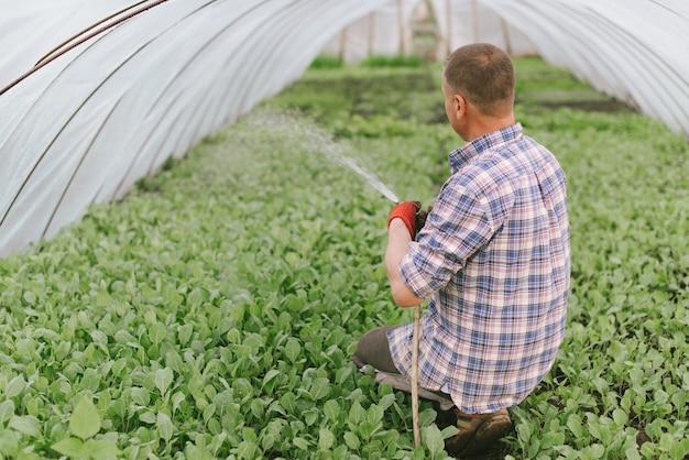 Farmer irrigazione serra. Foto Premium
