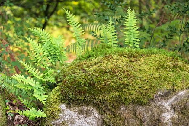 Felci che crescono sulle rocce nella foresta. Foto Premium
