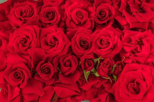 Sfondo festivo da molti boccioli di rose rosse Foto Premium