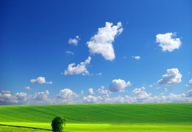Campo in una giornata di sole Foto Premium