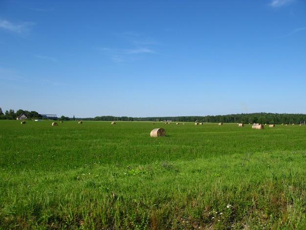 Campi e foreste dell'estonia Foto Premium