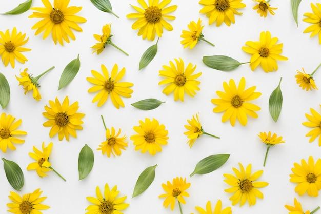 Disposizione piatta di margherite gialle Foto Premium