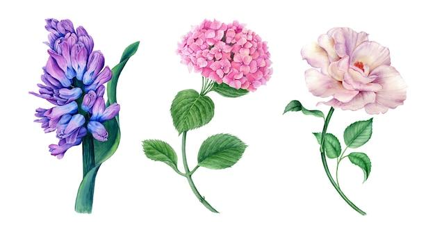 Collezione floreale di giacinto, ortensie e rose illustrazione botanica dell'acquerello dell'annata Foto Premium