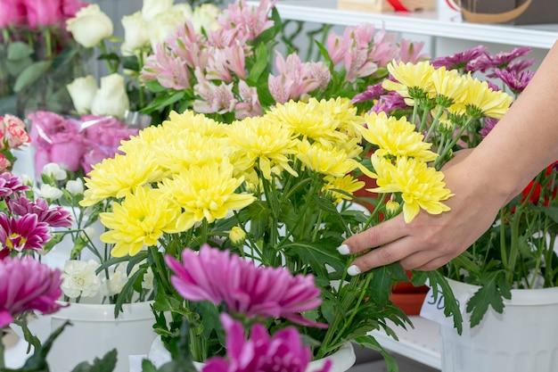 Fiore. priorità bassa dei fiori della camomilla del crisantemo. bouquet di fiori sfondo luminoso crisantemo floreale Foto Premium