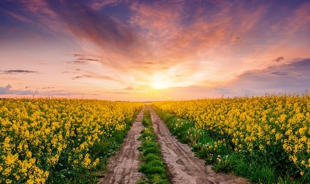 Alberi in fiore al tramonto in montagna Foto Premium