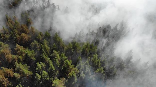 Gli incendi boschivi stanno bruciando violentemente Foto Premium