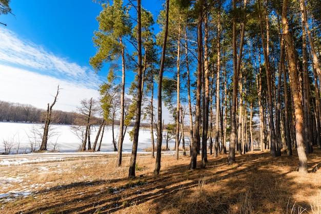 Foresta illuminata dal sole Foto Premium
