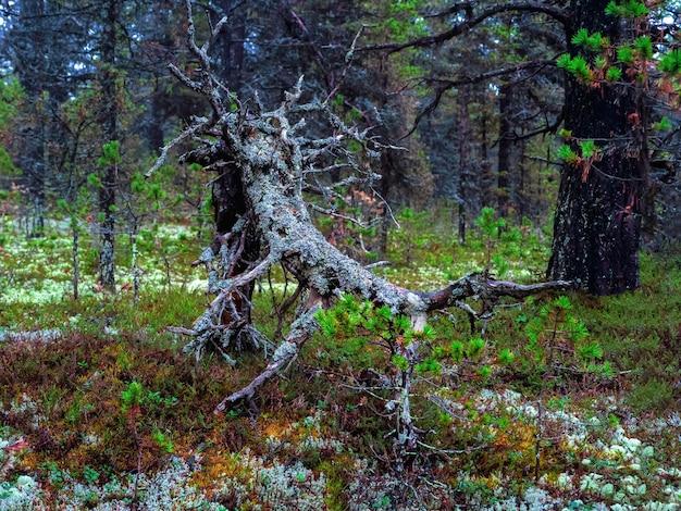 Mostro della foresta densa foresta settentrionale artica Foto Premium