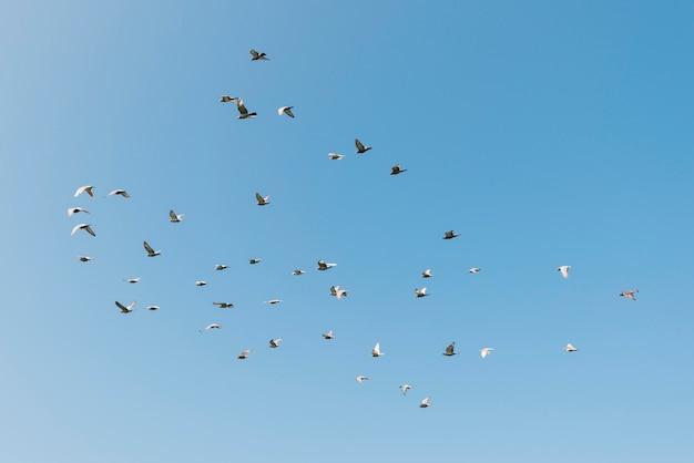 Concetto di libertà con uccelli in volo Foto Premium