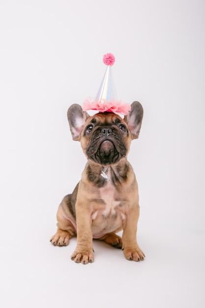 Un cucciolo di bulldog francese in un cappello compleanno ...
