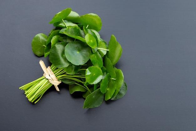 Foglie verdi fresche di centella asiatica o piante di centella asiatica sulla superficie scura. Foto Premium