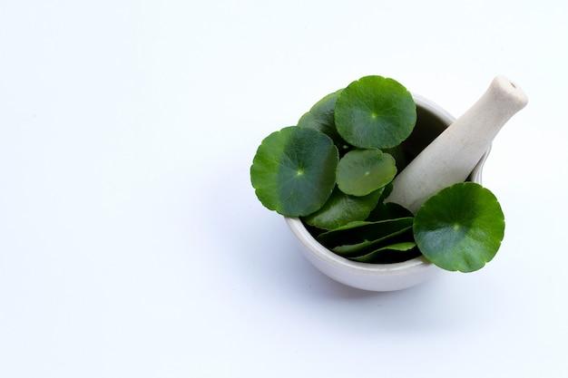 Verde fresco centella asiatica foglie o acqua centella pianta in mortaio con pestello su sfondo bianco. Foto Premium