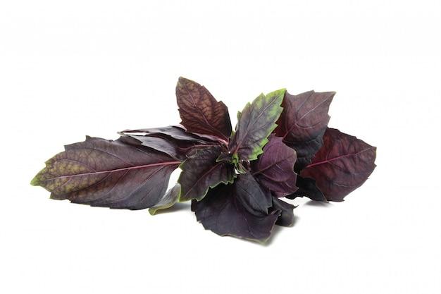 Basilico viola fresco isolato su priorità bassa bianca Foto Premium