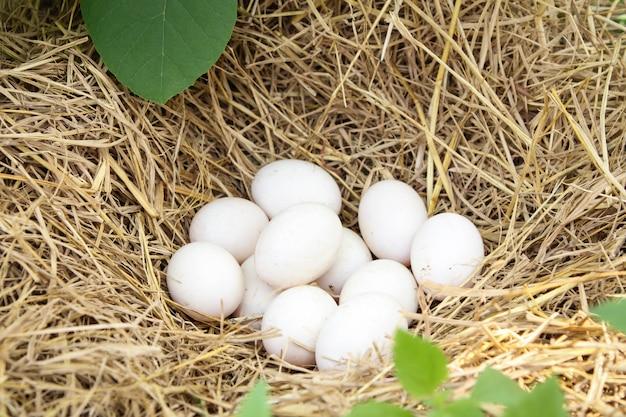 Uova bianche fresche dell'anatra in un nido in paglia Foto Premium