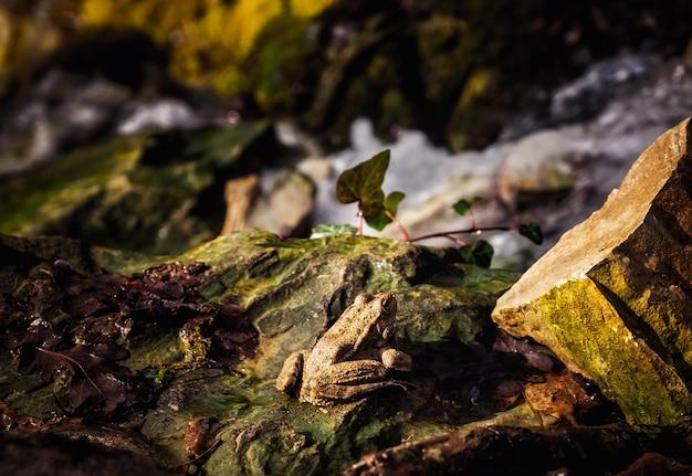 Una rana su una pietra si crogiola ai caldi raggi del sole primaverile Foto Premium