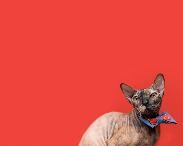 Vista frontale del bellissimo concetto di gatto Foto Premium