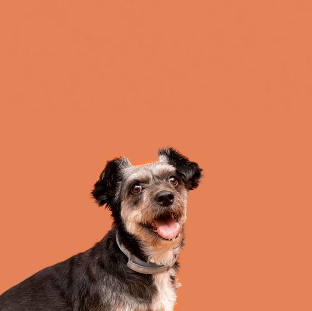 Vista frontale del simpatico cucciolo di razza mista con copia spazio Foto Premium