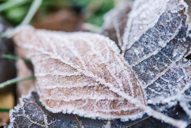 Foglia congelata con struttura di ghiaccio vicino alla natura all'aperto Foto Premium