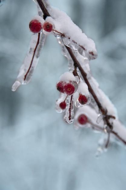 Bacche rosse congelate e neve Foto Premium